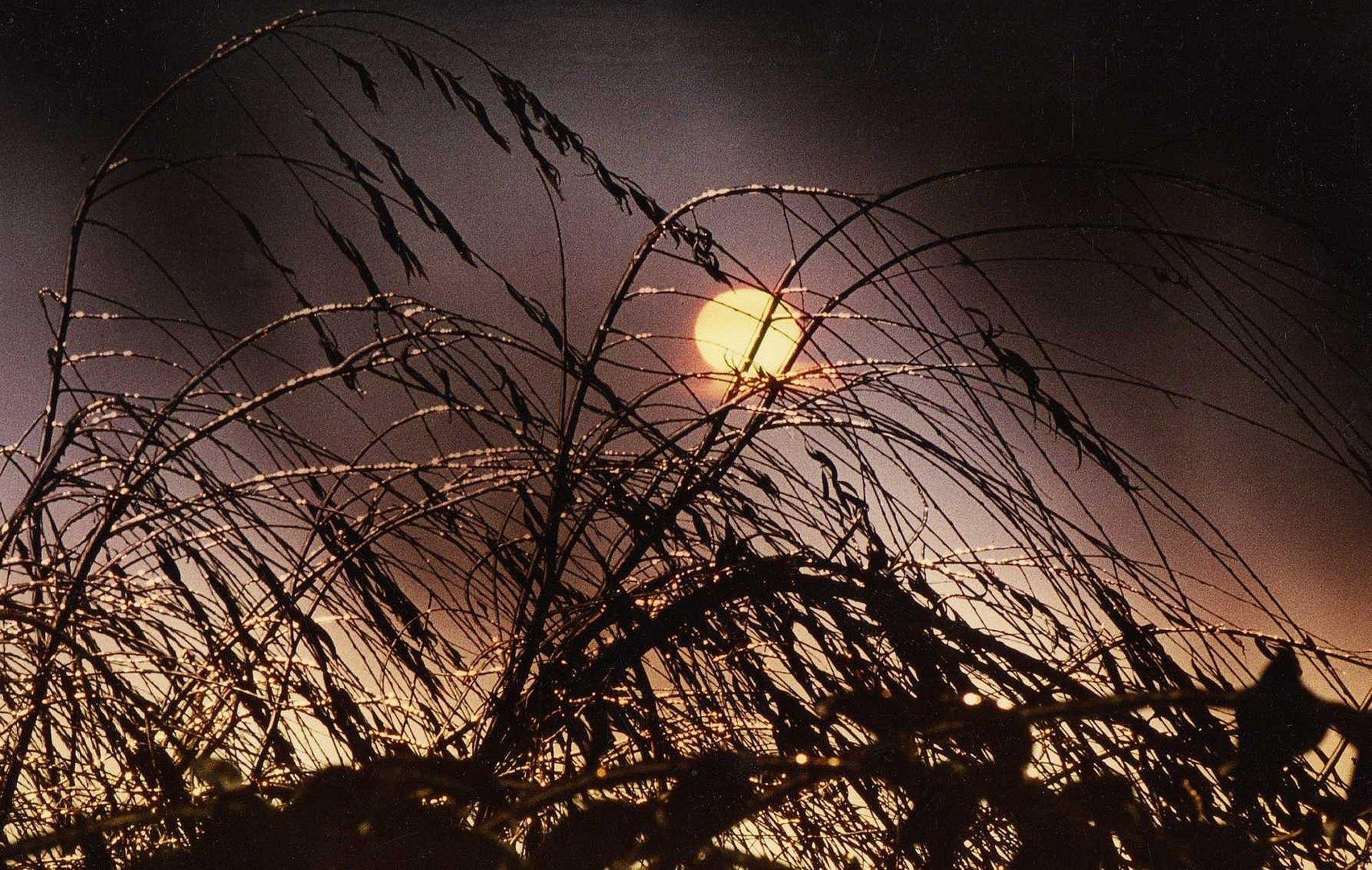 Les branches et la lune