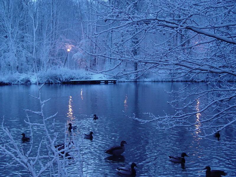Les canards autour du lac