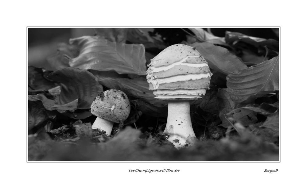 les champignons de la forêt