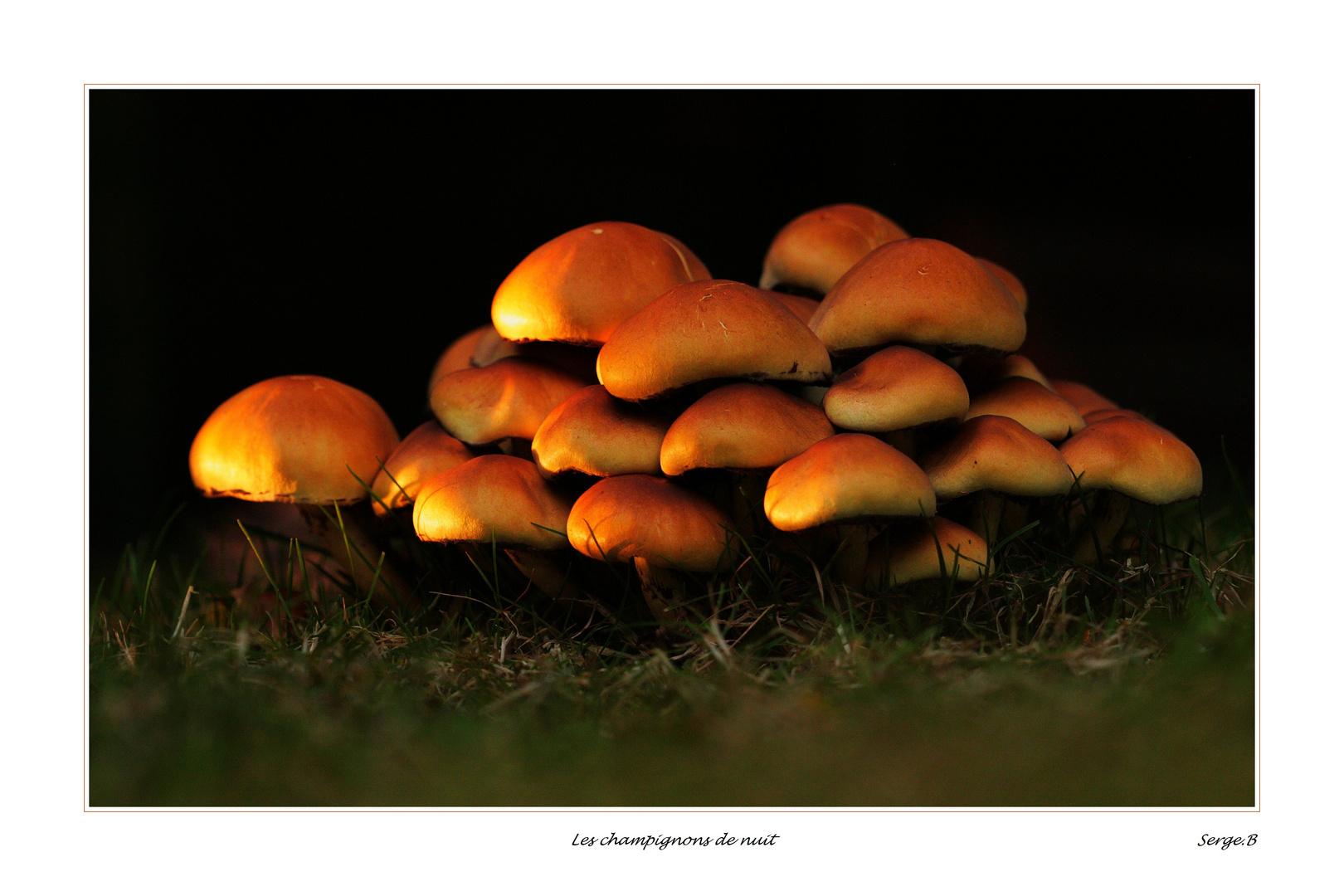Les champignons de nuit