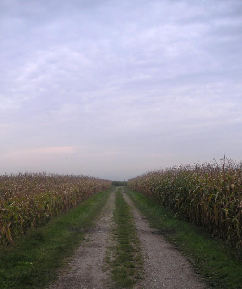 les champs
