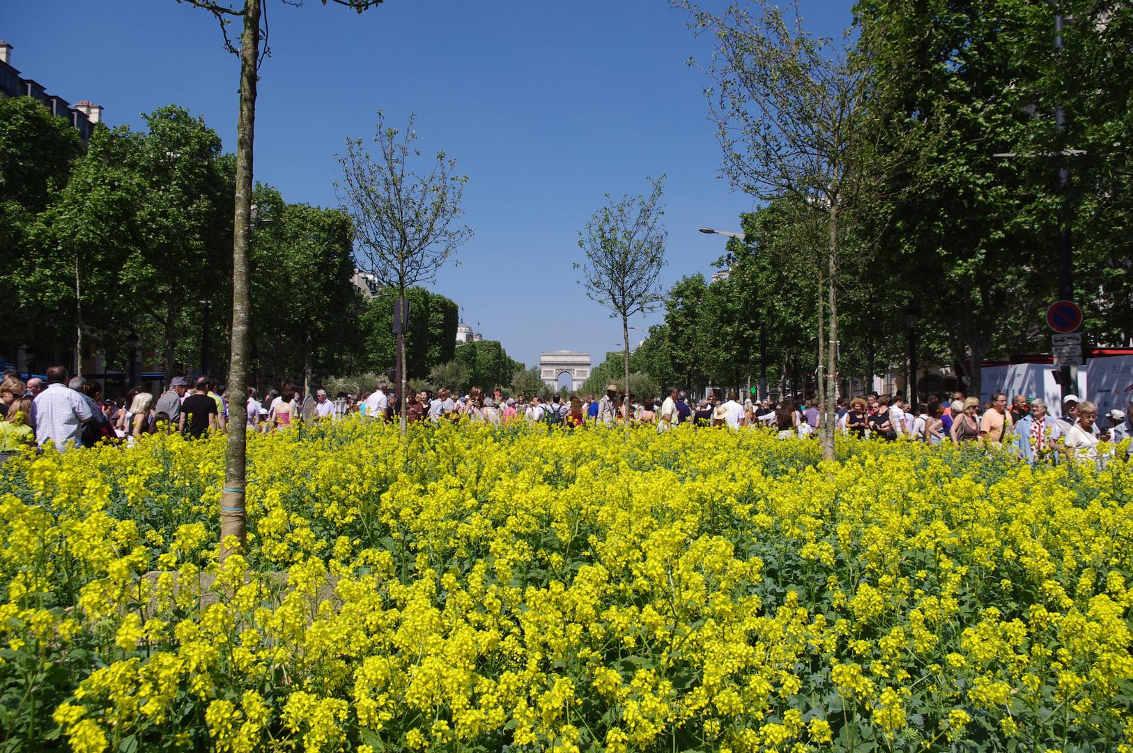 Les Champs Elysées oxygénés