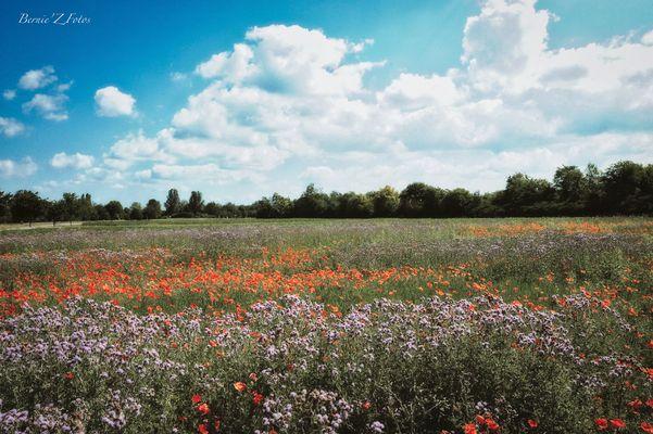 Fleurs Images & Photos