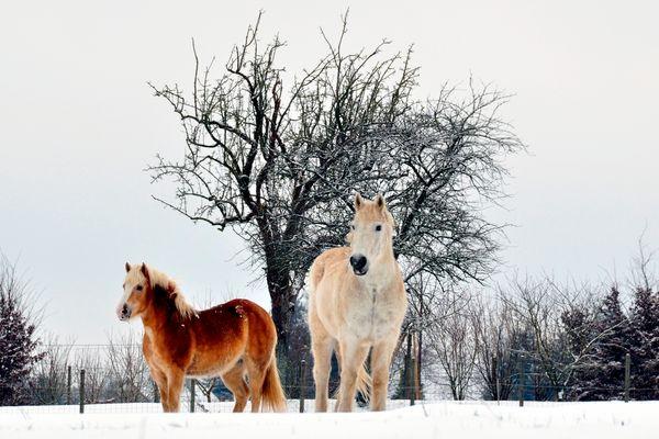 Les chevaux de la Gervaudière