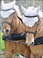 Les chevaux de trait, dans la cité de Carcasonne
