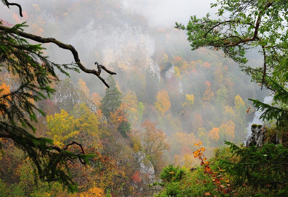 Les couleurs de l'automne #1
