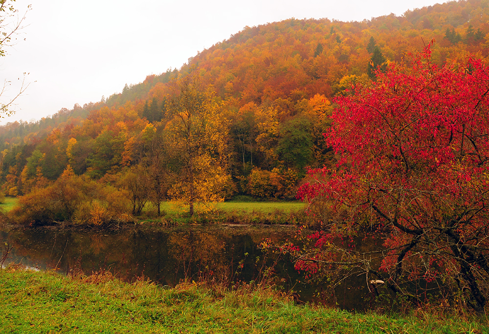 Les couleurs de l'automne #4
