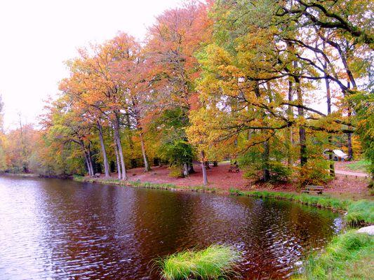les couleurs de l'automne ****