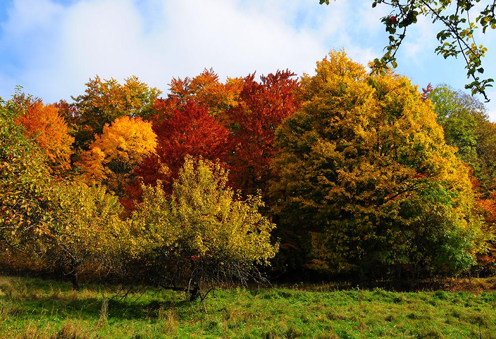 Les couleurs de l'automne #5