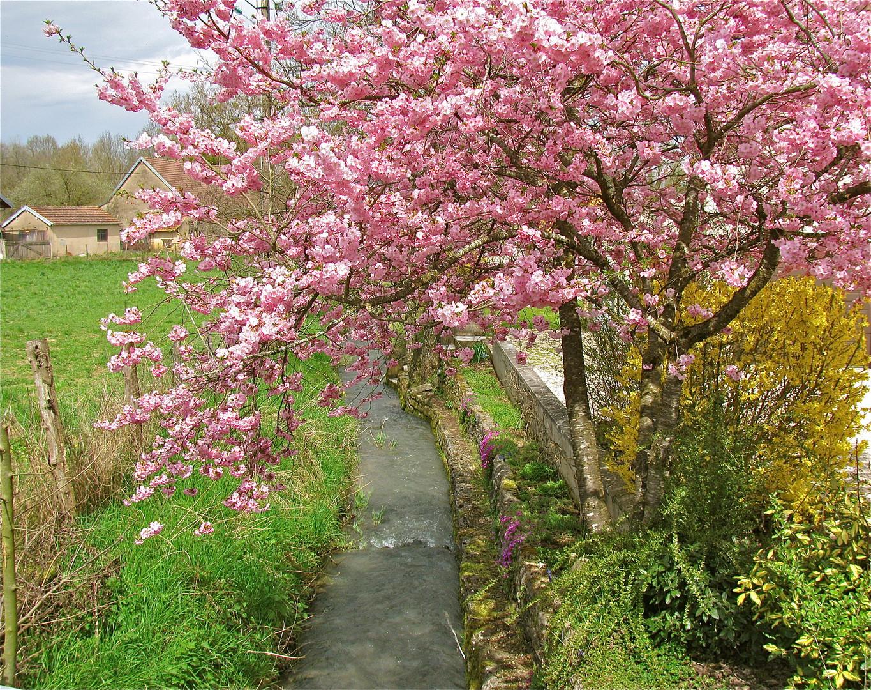 ... les couleurs de printemps 2 !!!...