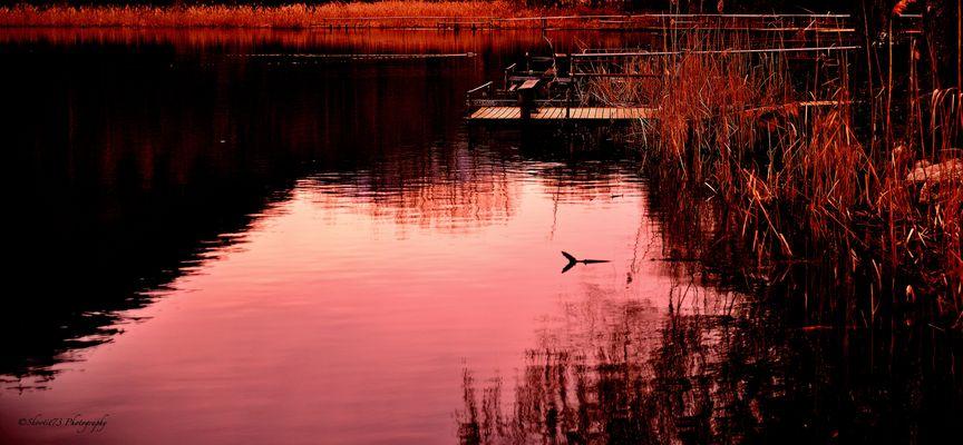 Les couleurs du lac