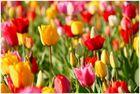 Les couleurs du printemps No. 2