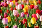 Les couleurs du printemps No.1