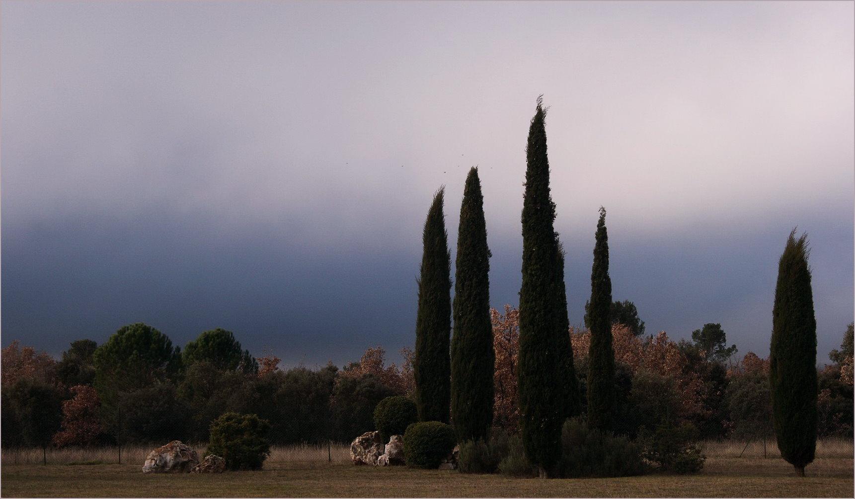 Les cyprés en hiver