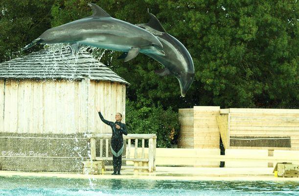 Les dauphins font leur show