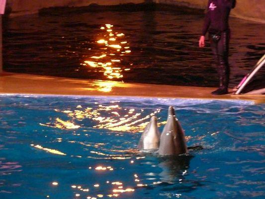 les dauphins Marineland