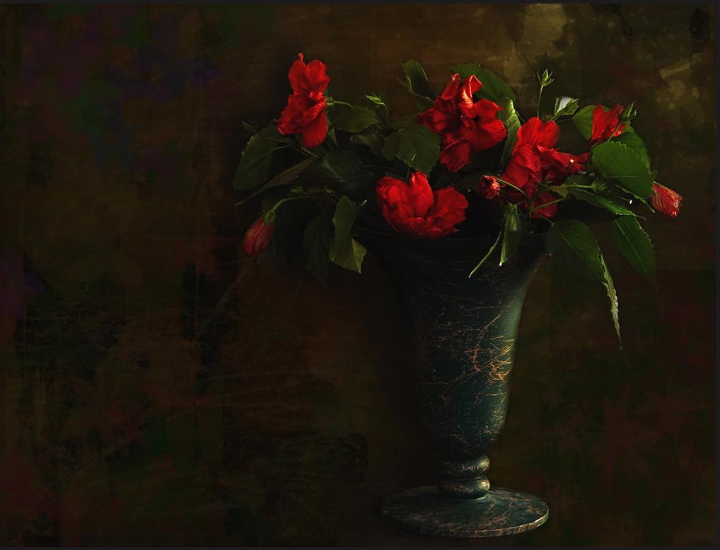 Les dernières fleurs de l'hibiscus