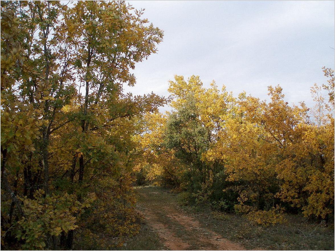 les derniers ors de l'automne