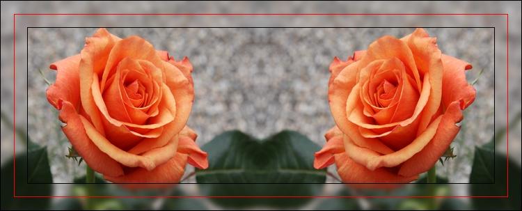 """"""" les deux roses """""""