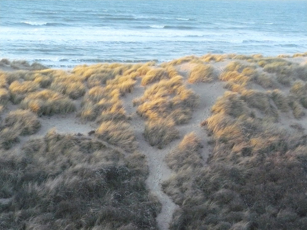 les dunes par un soir de vent
