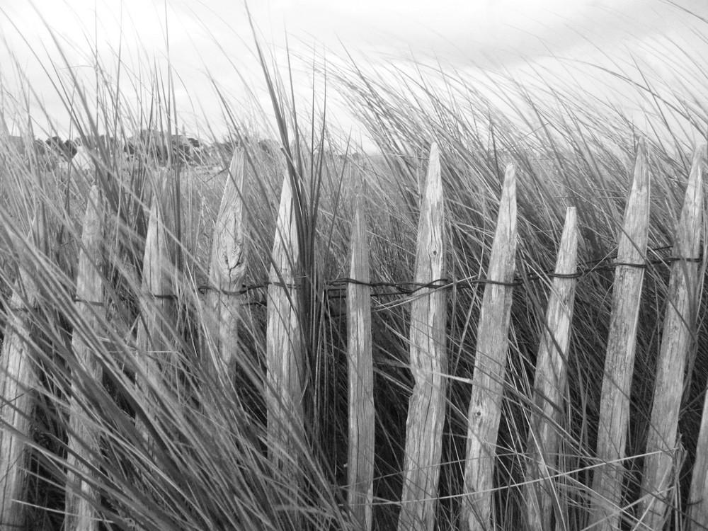 les dunes sont protégées