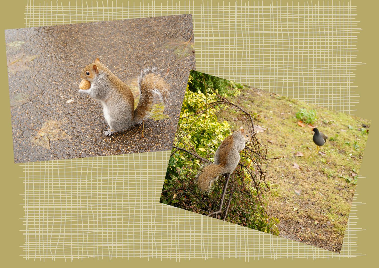 les écureuils londoniens, Londres