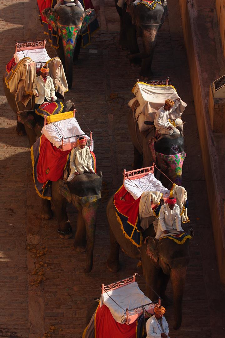 Les éléphants du fort d'Amber, Jaipur, Rajasthan.