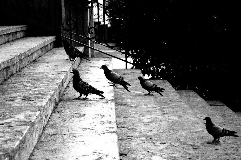 """"""" Les escales de Plaça"""""""