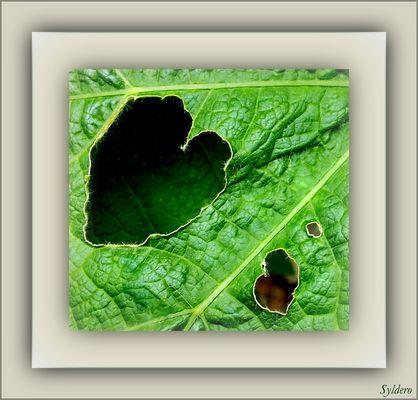 Les escargots amoureux