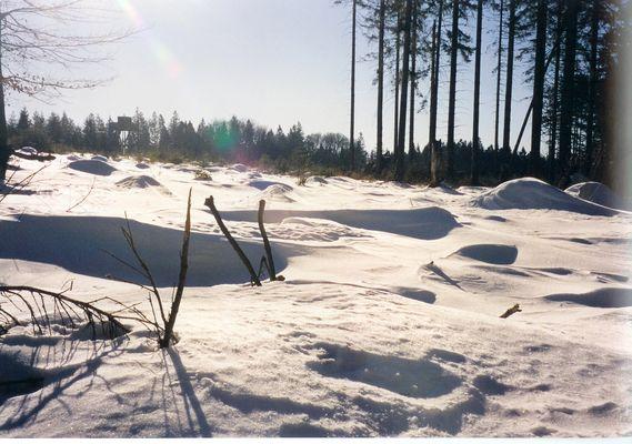 Les Fagnes sous la neige