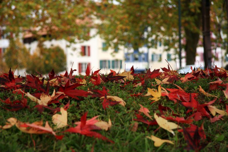 Les feuilles de ramasse ...
