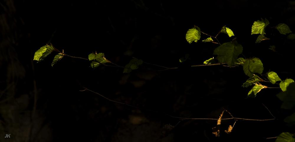 Les feuilles du printemps