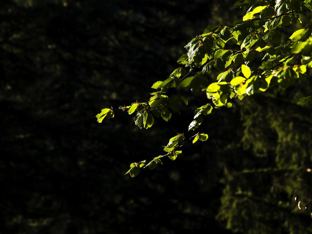 Les feuilles du printemps II