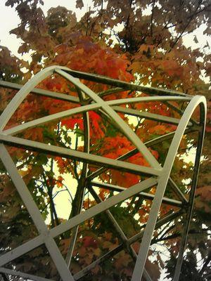 les feuilles emprisonnées