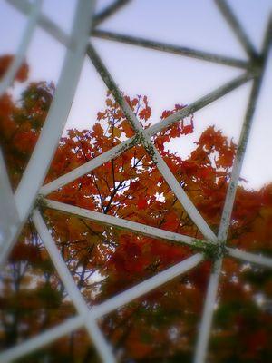 les feuilles emprisonnées suite