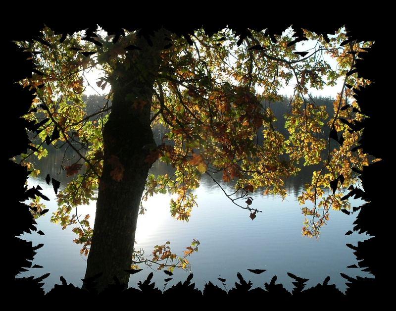 les feuilles l'encadrent