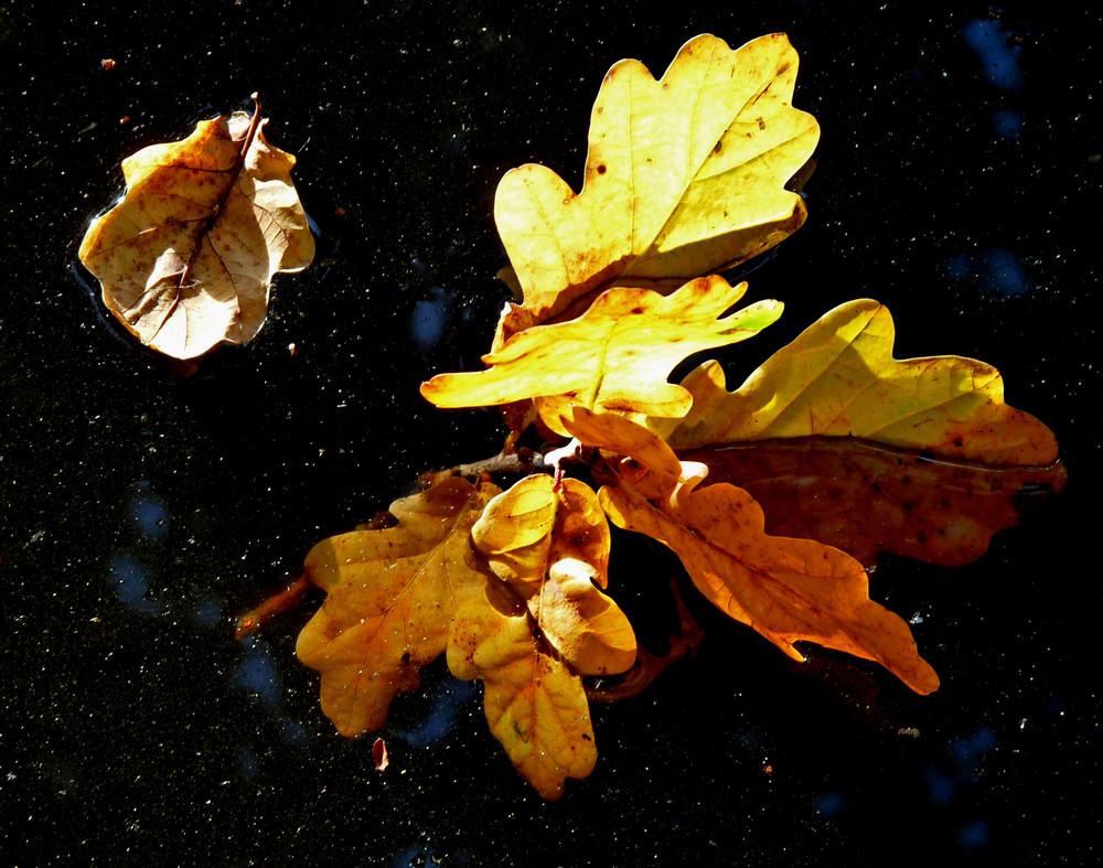 Les feuilles mortes ...