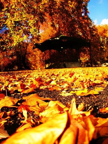 les feuilles prennent une couleur dorée