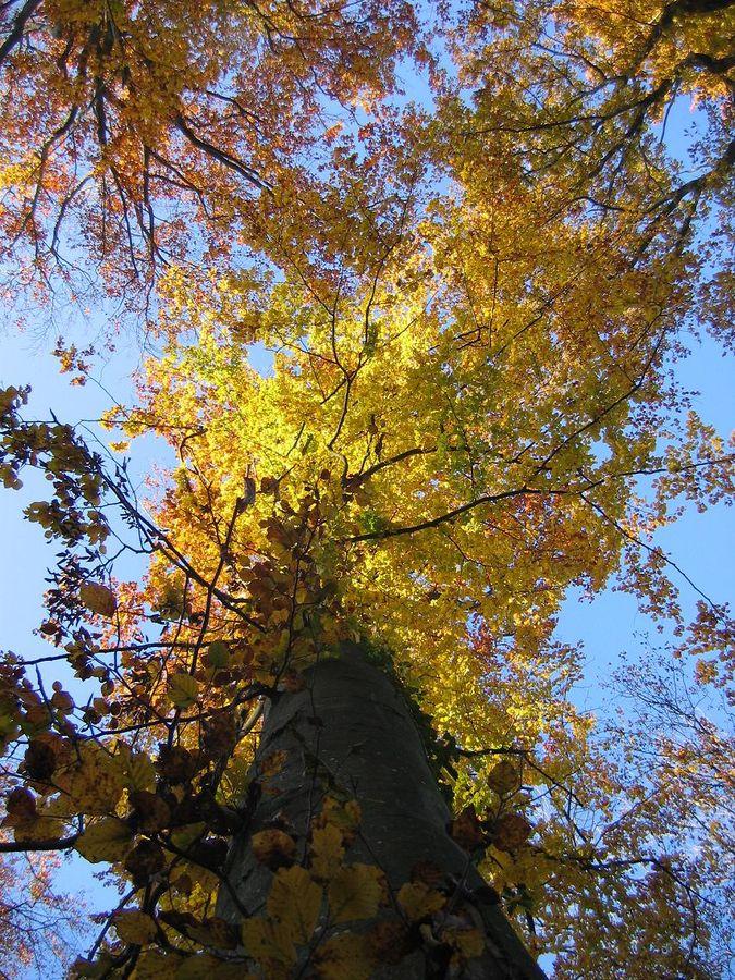 Les feuilles...d'or