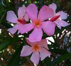 les fleurs de l ètè