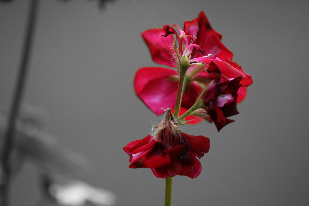 Les fleurs de la voisine 2