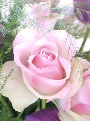 Les Fleurs de Pomponette