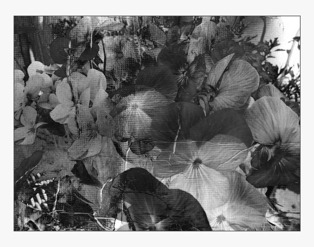 les fleurs s/w