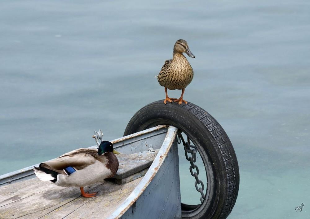 Les gardiens du bateau