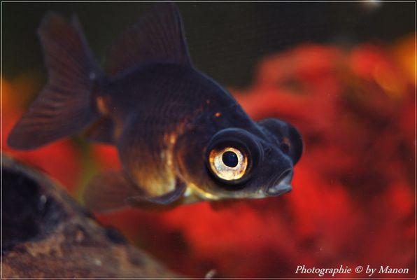 les gros yeux O_O