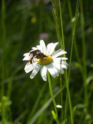 les insectes et la nature