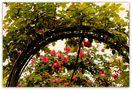 Les jardins de l'Alhambra à Grenade - 7 von Josiane64