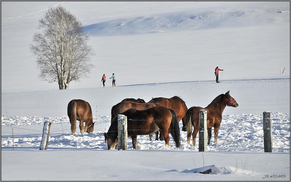 ....Les joies du ski de fond dans le Jura....