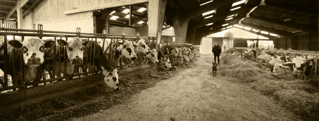 Les laitières .