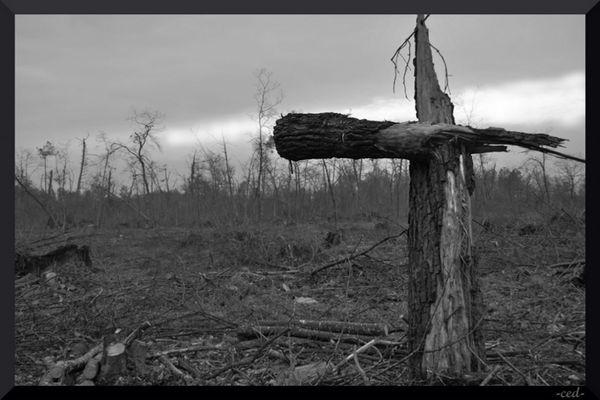 Les Landes dévastés...